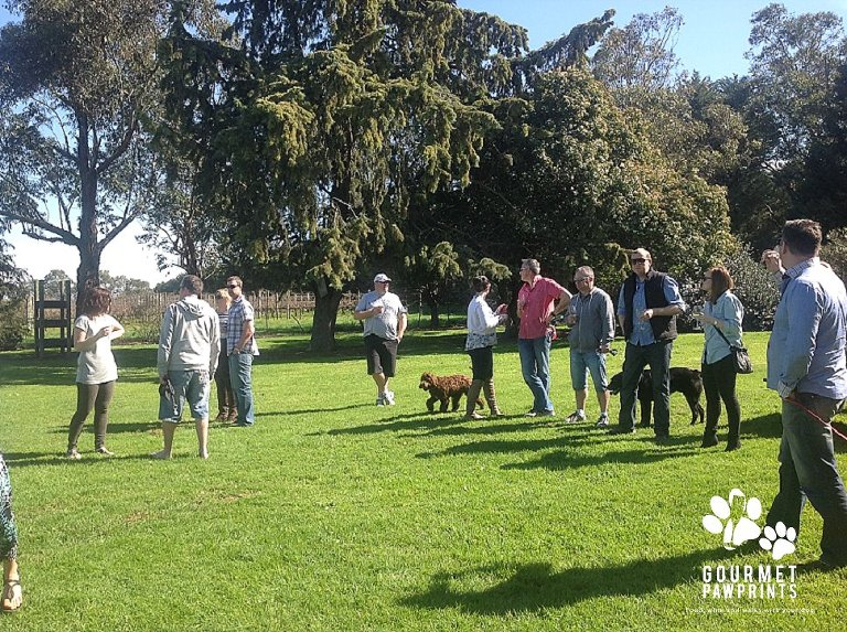 Yarra Valley Doggy Winery Tour #pawfect