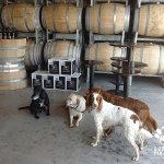 dog-friendly-winery-tours_0210