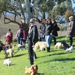 doggy-winery-tours_0904