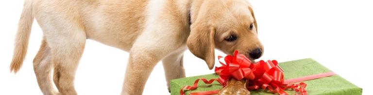 Gift Vouchers Pawfect Gourmet Pawprints
