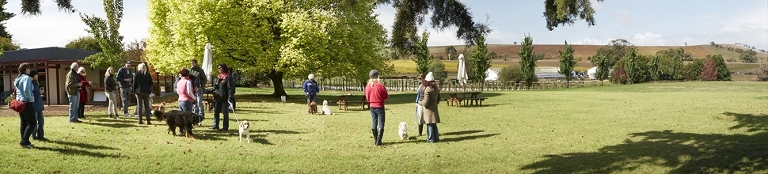 Yarra Valley Doggy Winery Tours #pawfect