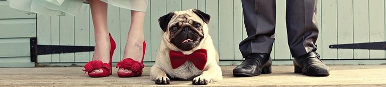 Dog Friendly Weddings Gourmet Pawprints