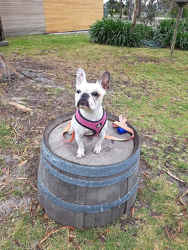 Mornington Peninsula Doggy Winery Tours pawfect