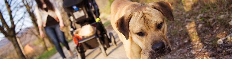 Williamstown Doggy Walking Tours Gourmet Pawprints Pawfect