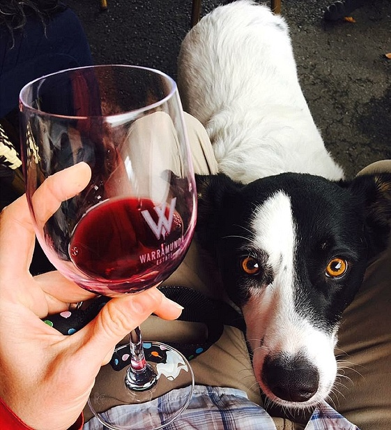 5d38f304404b 28 May 2017 Yarra Valley Doggy Winery Tour