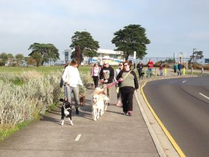 Doggy Walking Tour Williamstown Pawfect
