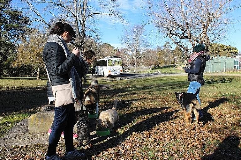 Truffle Hunt Gourmet Pawprints Pawfect Dogs
