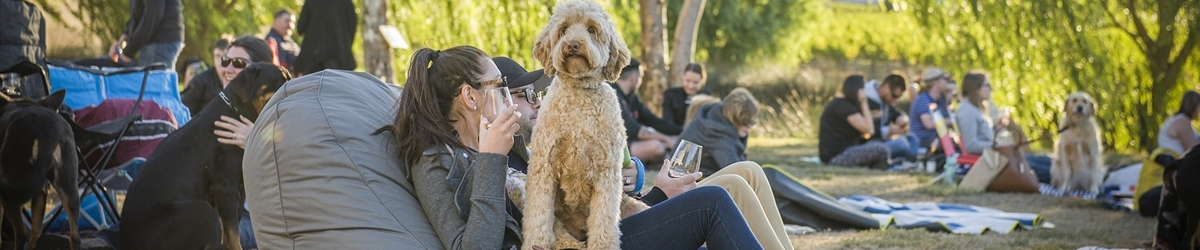 Doggy Winery Cinema Pawfect Pop Up Cinema