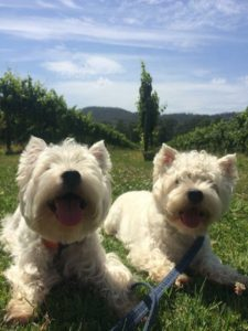 Melba Trail Doggy Winery Tour