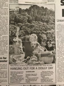 Herald Sun Doggy Picnic Adventures Hanging Rock