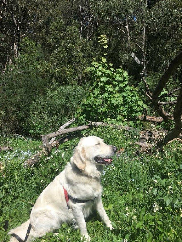 Doggy Picnic Adventures