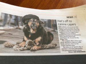 Geelong Advertiser Around The Bay Doggy Trek