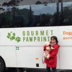 Out and about with dogs in Melbourne