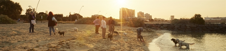 Dog Friendly Activities In Melbourne