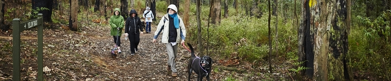 Dog Friendly Activities Melbourne