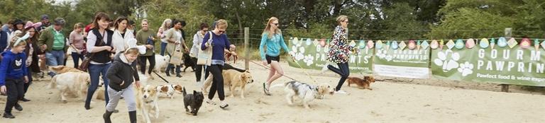 Doggy Amazing Race